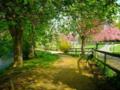 jardin lumineux de prunus