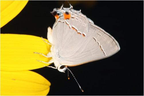 Macro buuterfly by Davidson