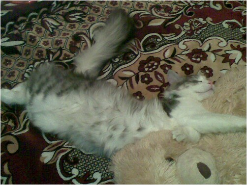 cat playing with teddy bear