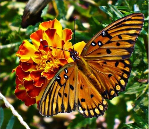 Flutter and a #flower by JDBarlow