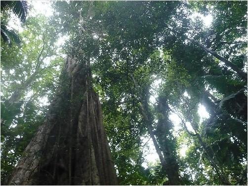 Animals of the Rainforest Canopy - Rainforest Education Website