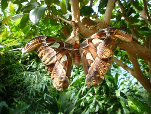 Rare Giant Moth bySqueeGeePwrWash