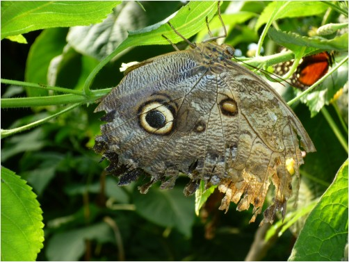 Butterfly with Fake Eye: SqueeGeePwrWash