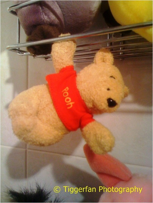 Pooh is Hanging Out